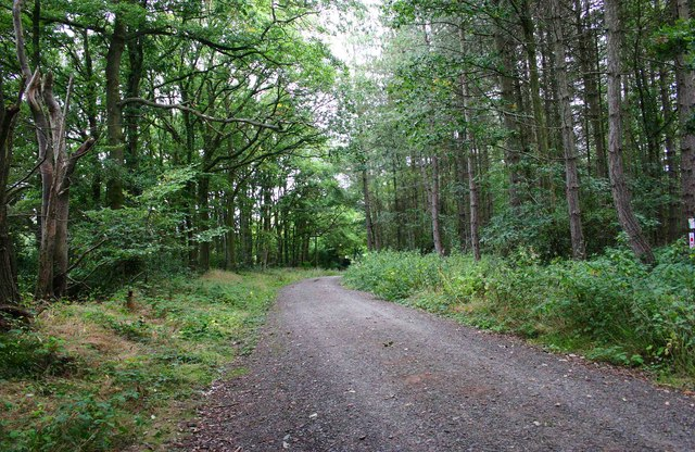 Forestry road, Ribbesford Wood, near Bewdley, Worcs