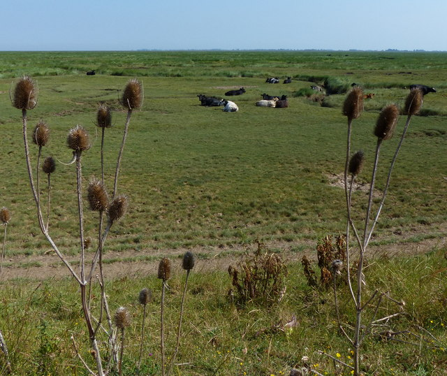 Salt marsh along The Wash coast