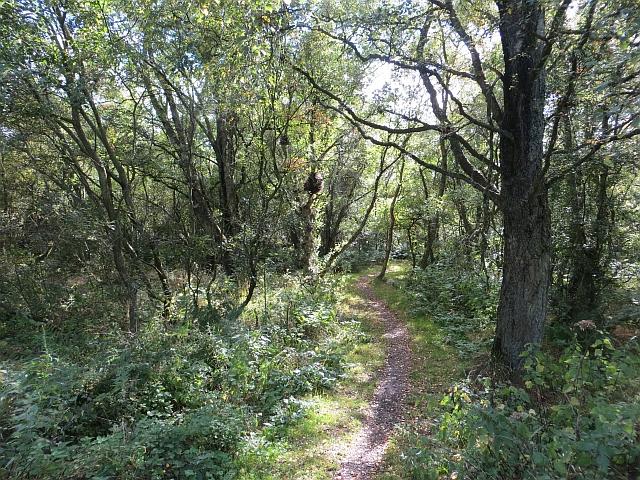 Path, Redford Wood