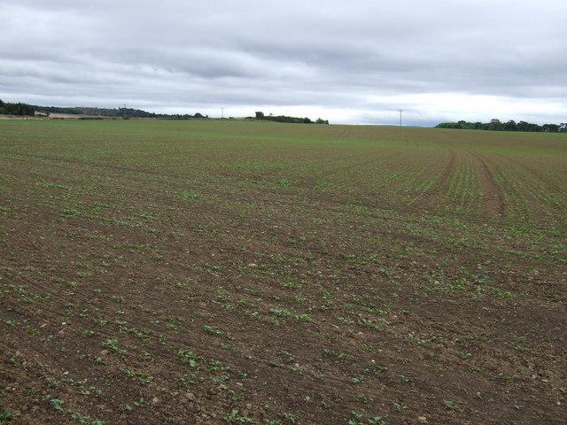 Farmland near Blakeny Knowe