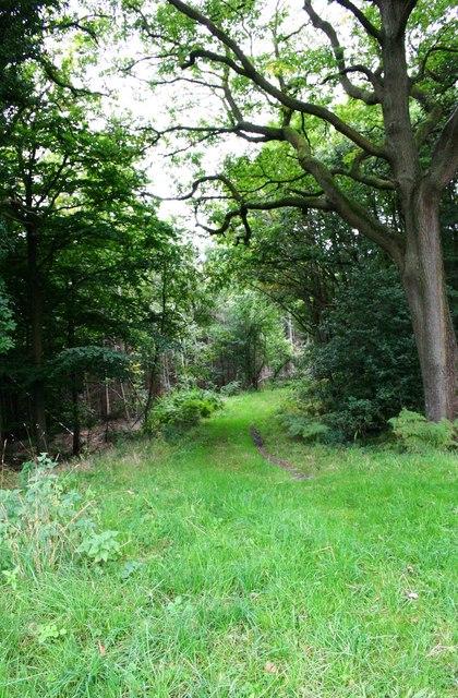 Footpath in Ribbesford Wood, near Bewdley, Worcs