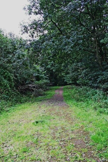 Public footpath in Ribbesford Wood, near Bewdley, Worcs