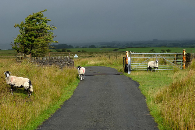 Cattle Grid on moorland road to Wray