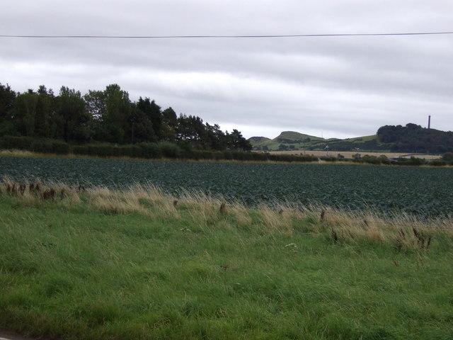Cabbage field near Corn Hill