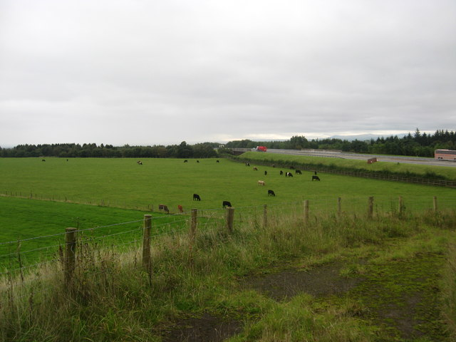 Cattle grazing at Raeburnhead in Dumfries and Galloway
