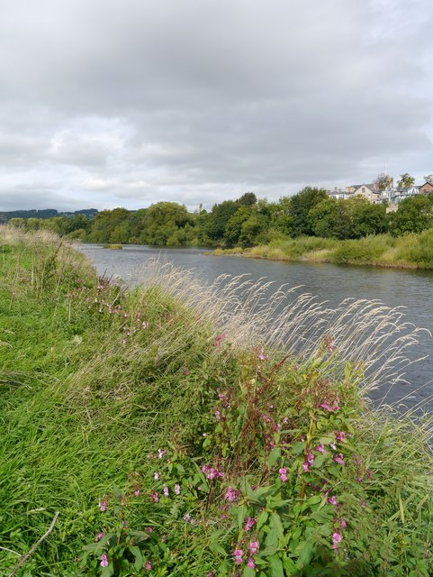 Tyneside Vegetation, Corbridge