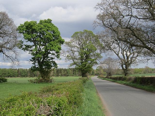 Road near Greenhall