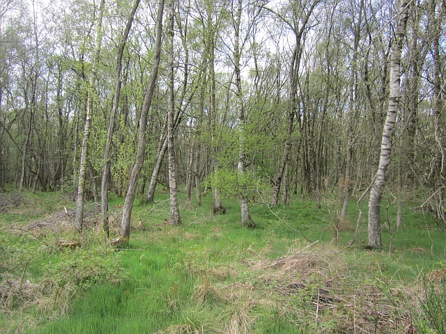 Woodland, East Craigmuir