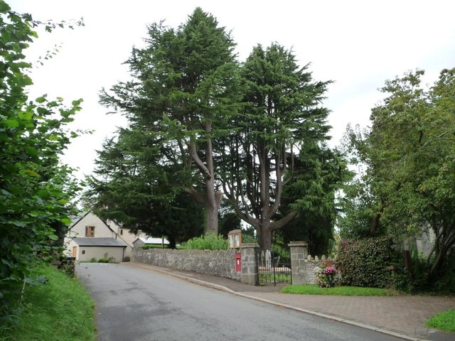 Large trees in the churchyard, Coed-y-paen