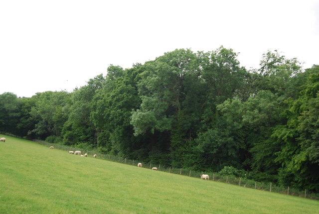 Kemland Wood