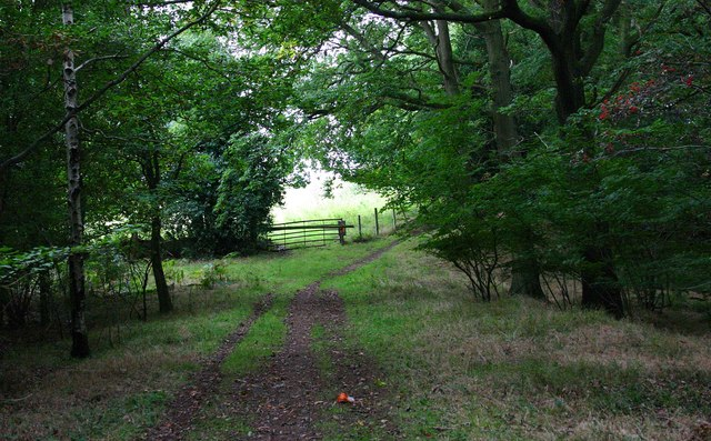 Public footpath and forestry track in Ribbesford Wood, near Bewdley, Worcs