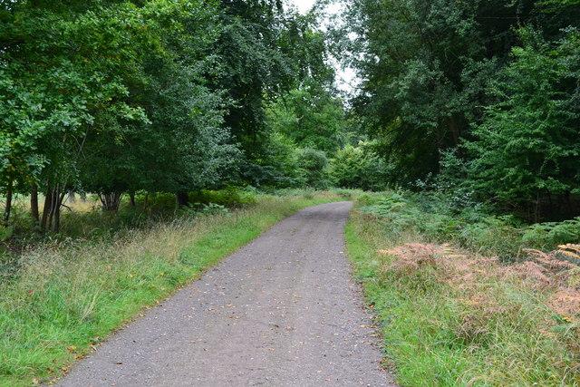 Track in Bentley Wood