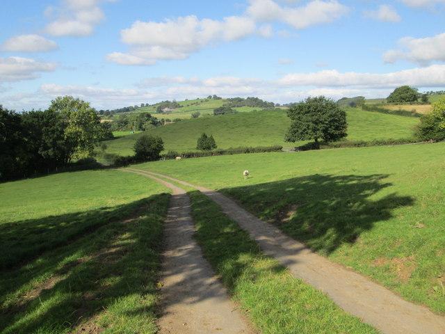 Near Holly Hill