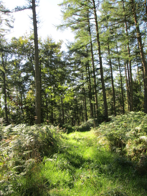 Rutters Plantation