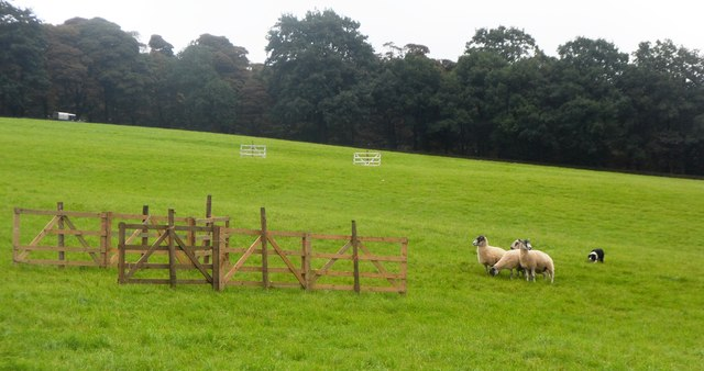 Sheepdog Trials at Hayfield Country Show