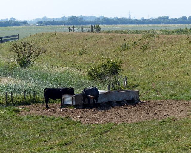 Cattle troughs at Wyberton Marsh