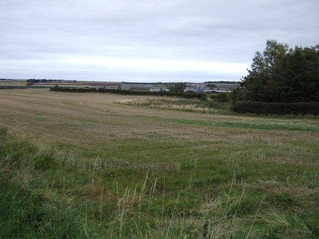 Farmland, Newmains