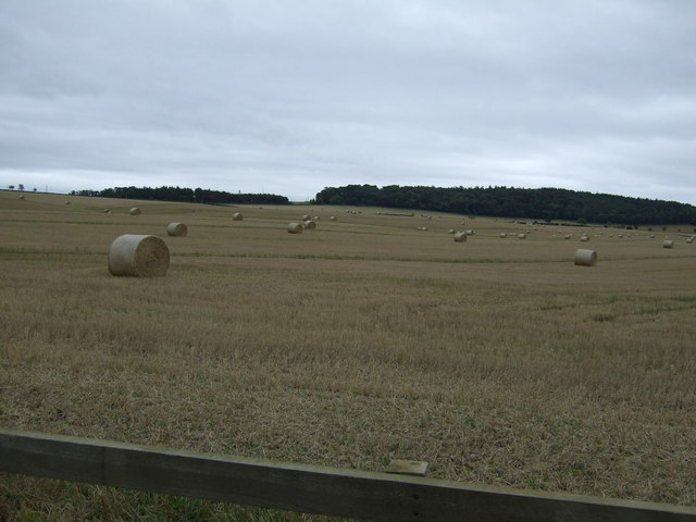 Farmland, Newmains