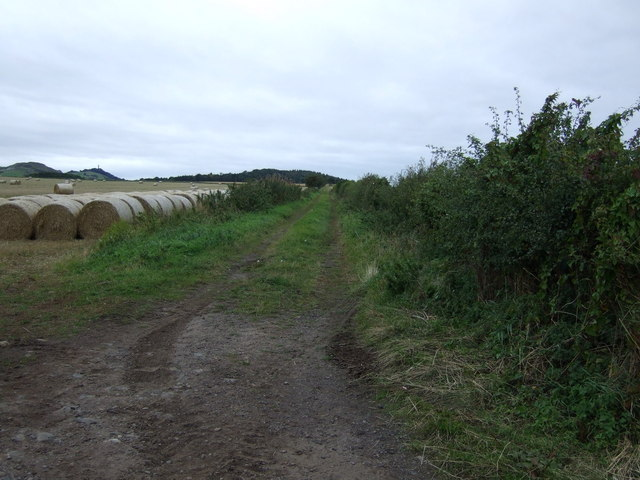 Farm track, Lammerview