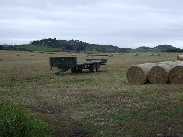 Farmland, Lammerview
