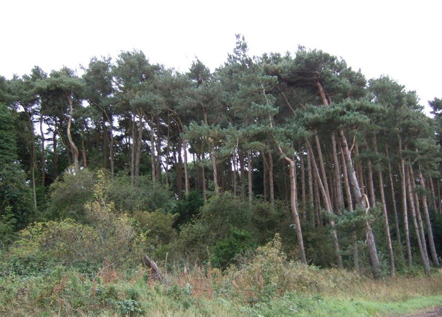 Woodland beside the B1347