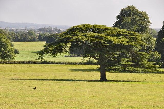 Killerton Park : Grassy Field