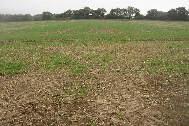 Great Wildcroft Field - (20.5 acres)