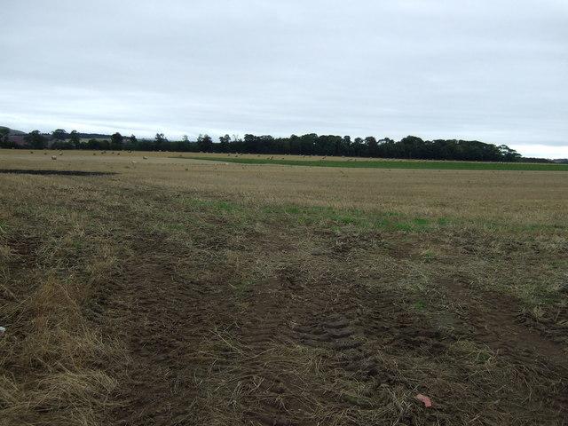 Farmland north of Fortoun Bank