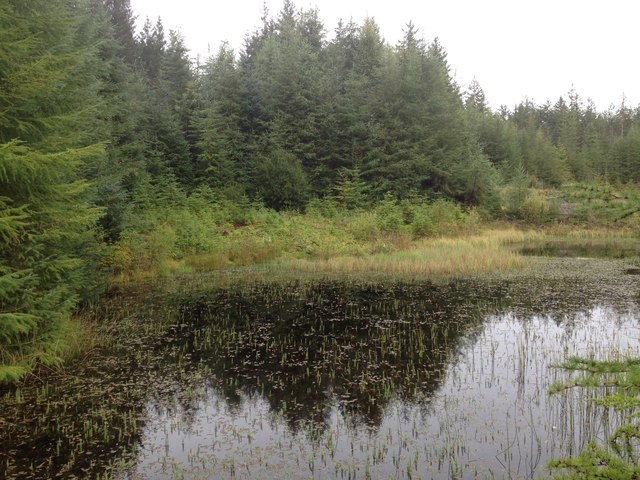 Flooded gravel pit in Leanachan Forest