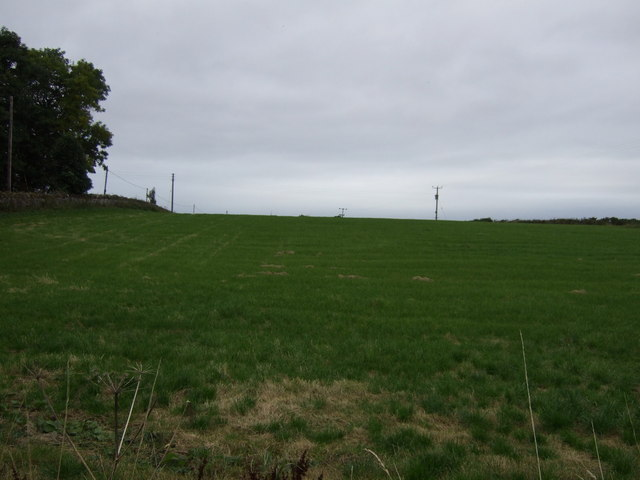 Farmland beside Duncanson's Wood