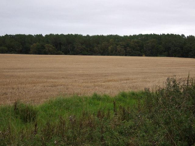 Farmland towards Binning Wood