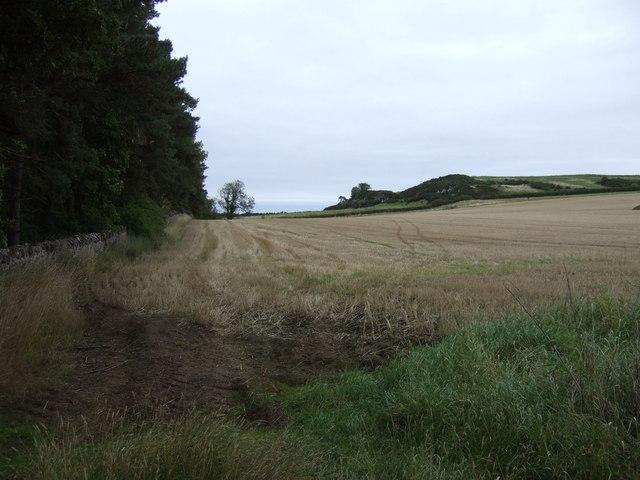 Farmland beside Binning Wood