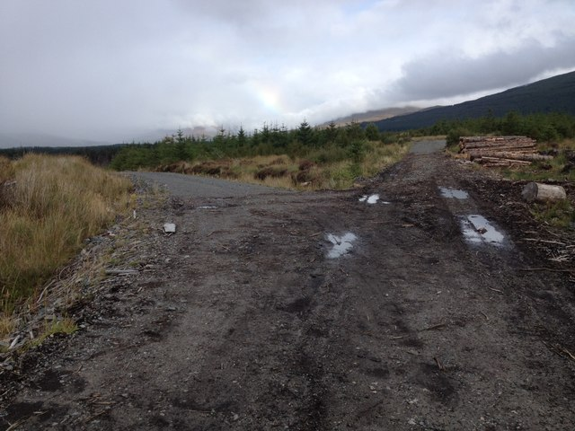 Junction of forestry roads in Leanachan Forest