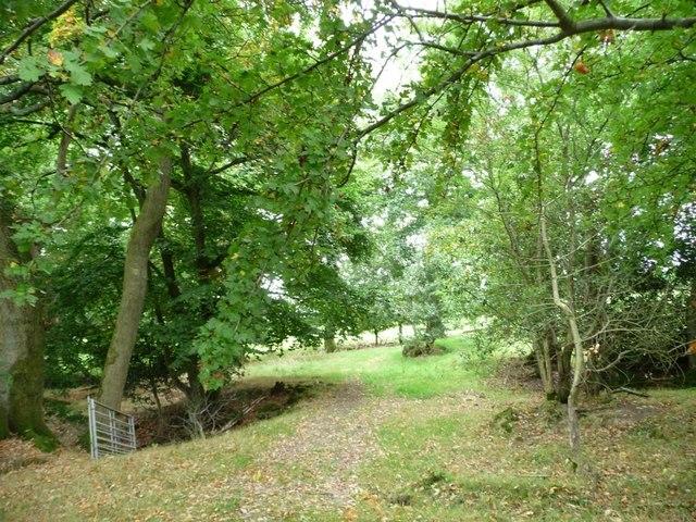 Woodland at the edge of Jenny's Bushes