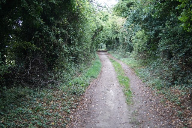 Secluded stretch of The Harrow Way