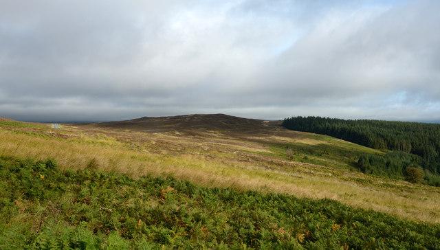 Moorland adjacent to B4391