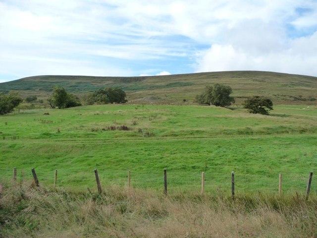 Track across a field, north of Ty Rheinallt ruins