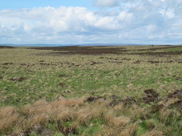 Moorland between Highspoon Hill and Watty Bell's Cairn
