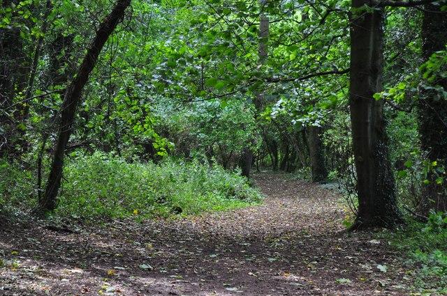 East Devon : Columbjohn Wood
