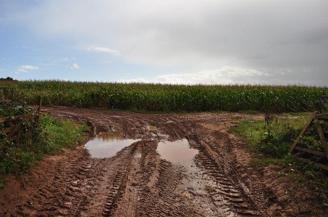 East Devon : Crop Field