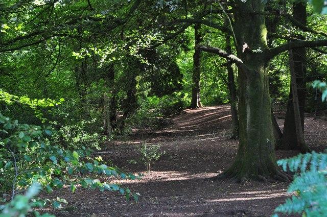 East Devon : Danes Wood