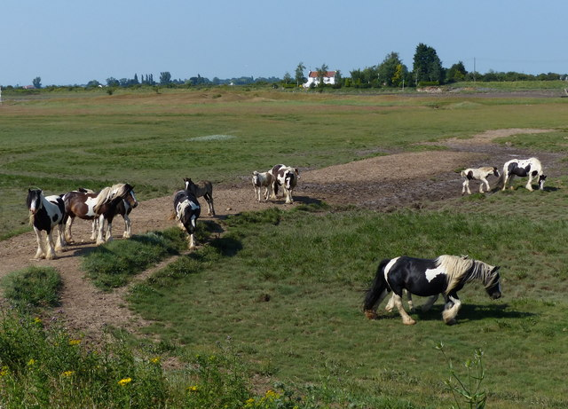 Horses near the Macmillan Way footpath