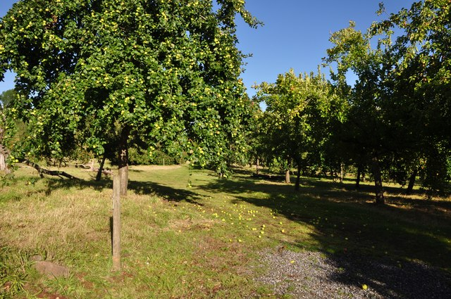 East Devon : Apple Trees