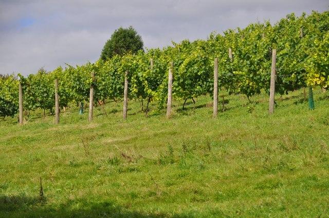 Mid Devon : Vineyards