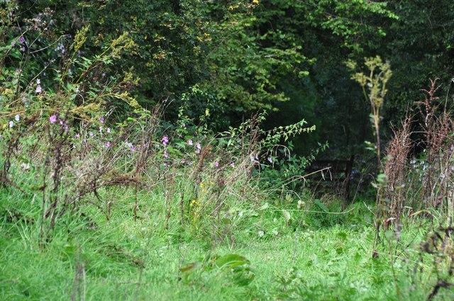 Mid Devon : Grassy Path