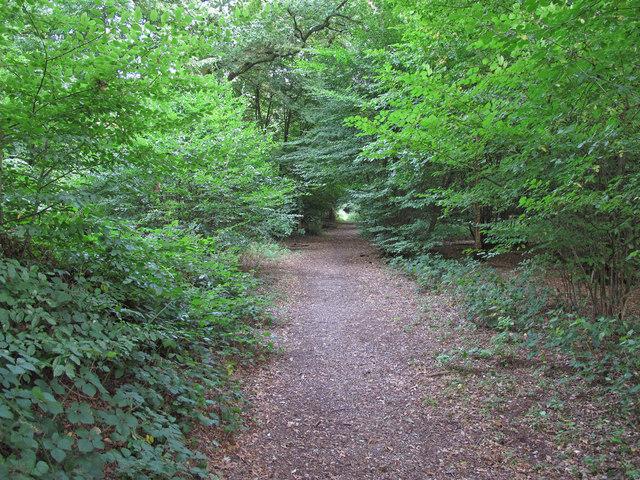 Path into  Crowsheath Wood, Downham