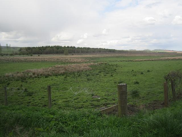 Wetland pasture