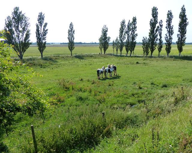 Horses near Bleak House Farm