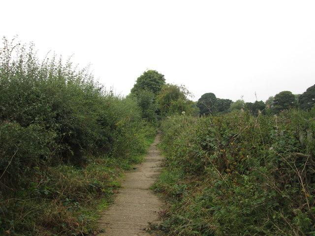 Back Lane