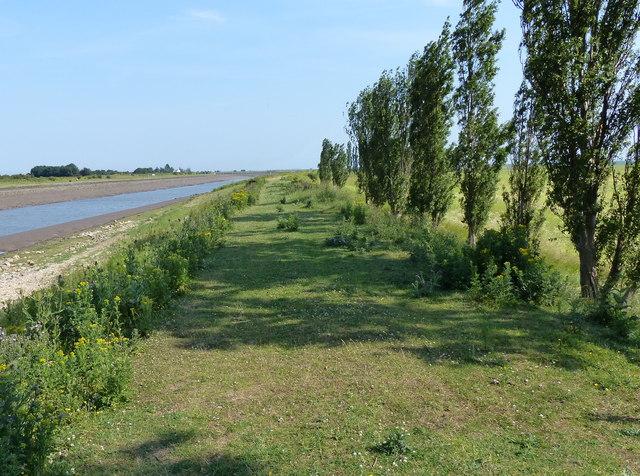 Trees along the Macmillan Way footpath